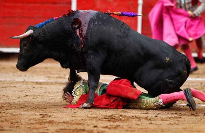 Bulls Fight Jokes Times
