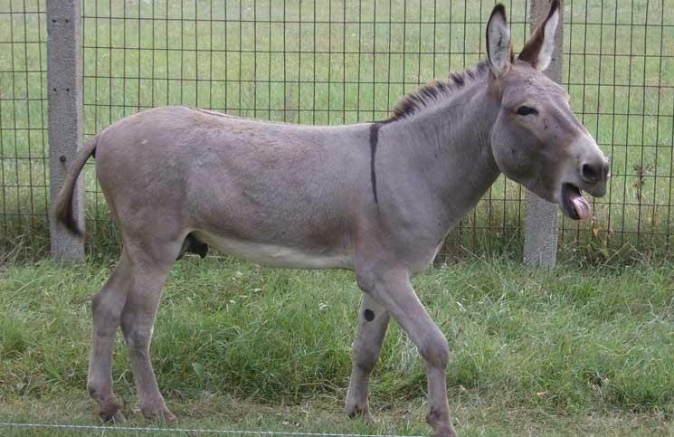 Arab Love Donkey Jokes Times