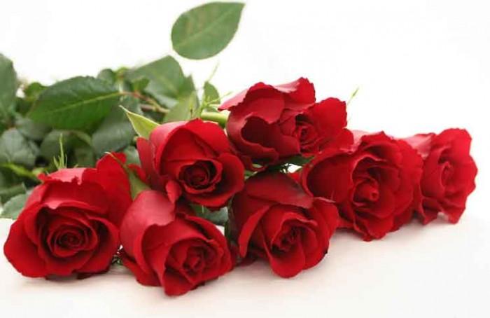 Beautiful Red Roses Jokes Times