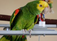 Beautiful Parrot New Home Jokes Times