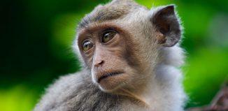The Motion Monkey Jokes Times