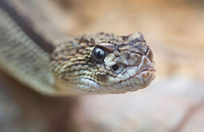 Thirsty Snake Jokes Times