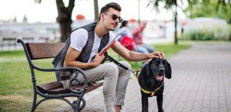 Petting the Dog Jokes Times
