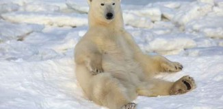 Am I a Real Polar Bear Jokes Times