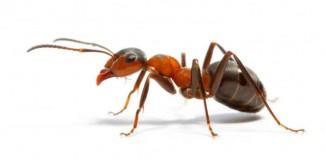 Ant Adventure Jokes Times