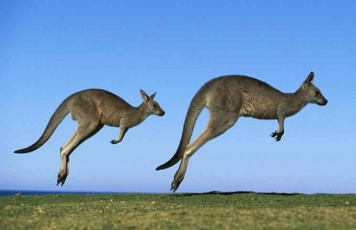 Aussie Flight Simulator Jokes Times