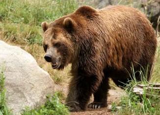 Bear Hunting Jokes Times