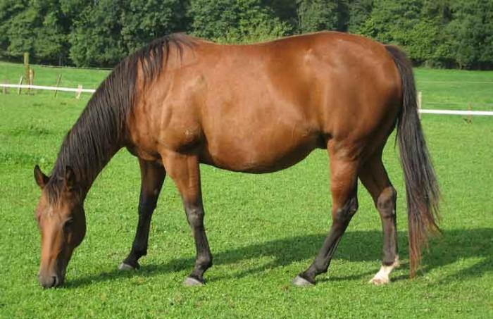 Blind Horse Jokes Times