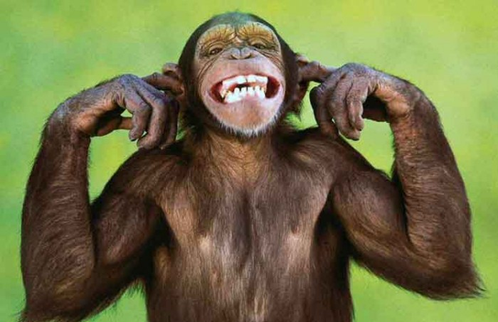 C Monkey Jokes Times