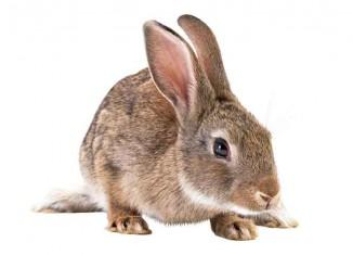 Dead Rabbit Jokes Times