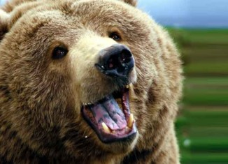 Grizzly Bears Jokes Times