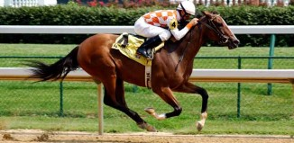 Horse Races Jokes Times