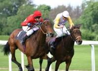 Racing Horse Jokes Times