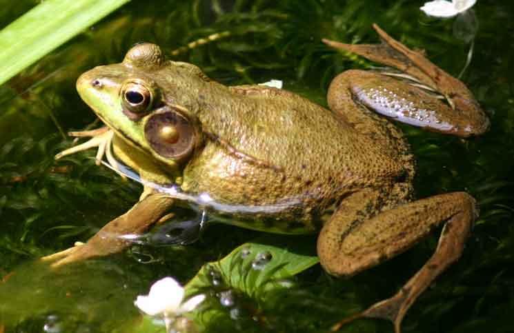 The Princess Frog Jokes Times