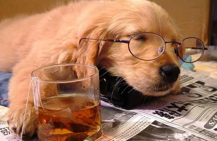 Tired Dog Jokes Times