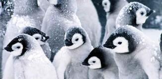 Twenty Penguins Jokes Times