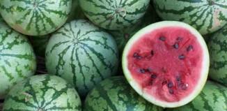 Watermelons Farm Jokes TImes