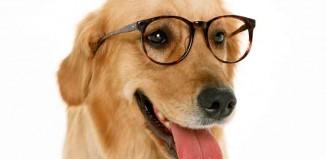 Who has the Smarter Dog Jokes Times
