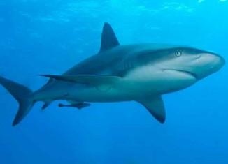 Why Sharks Circle before Attacking Jokes Times
